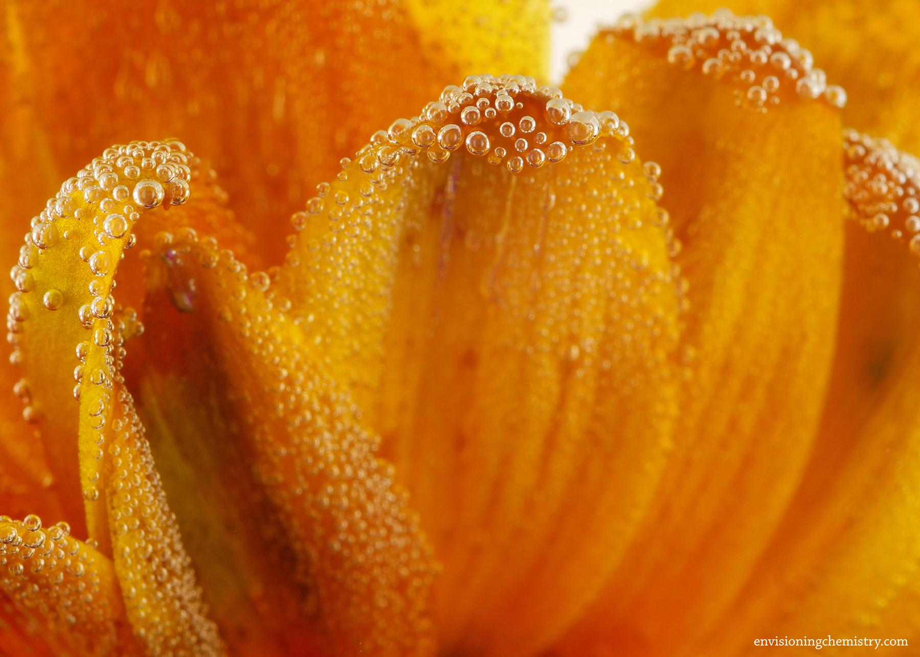 Flowers&Colors_0005.jpg
