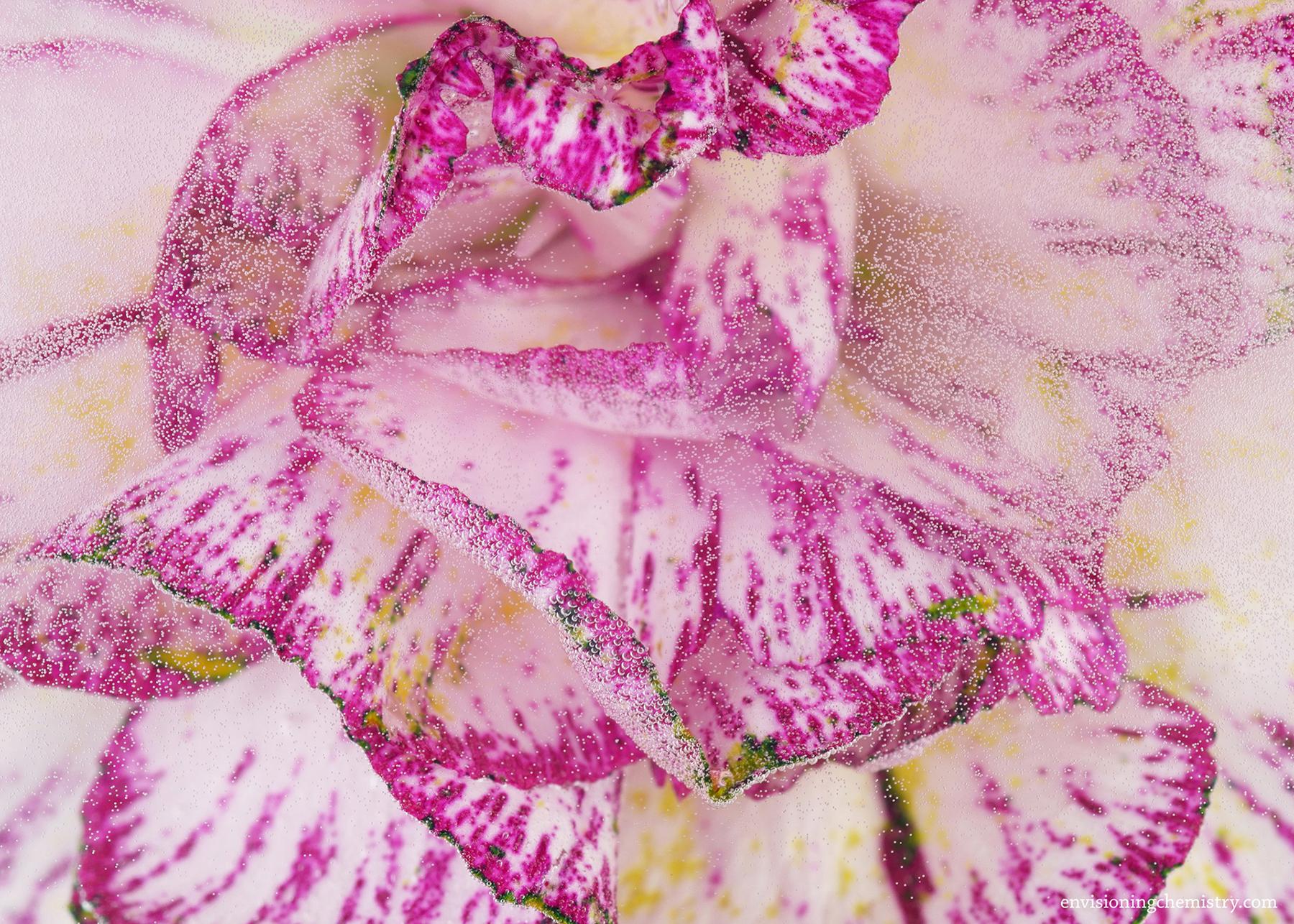 Flowers&Colors_0009.jpg