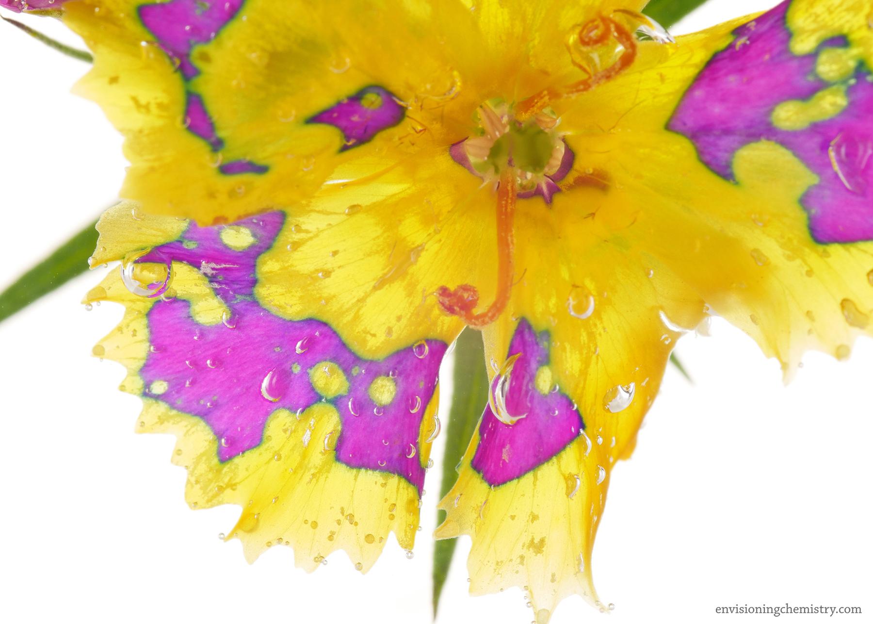 Flowers&Colors_0015.jpg