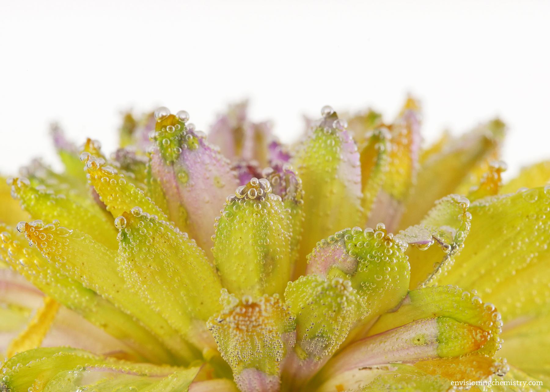 Flowers&Colors_0013.jpg