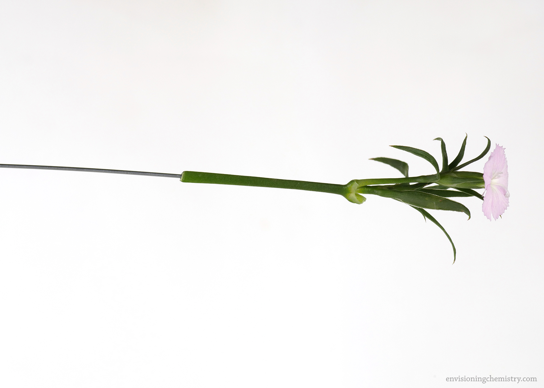 Fixing the flower with an iron wire.