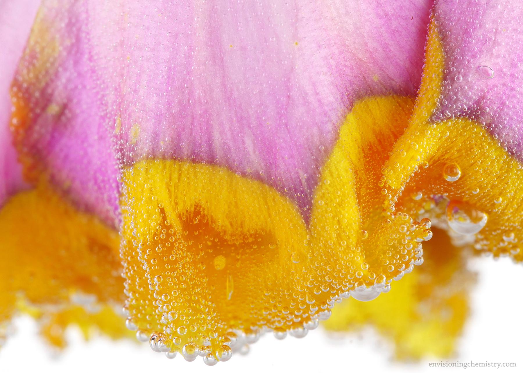 Flowers&Colors_0008.jpg