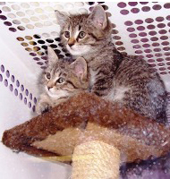 mates-kitten-adoption-web-2.jpg