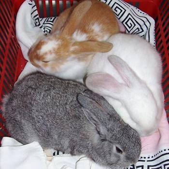 Rabbits, Ferrets & Pocket Pets -