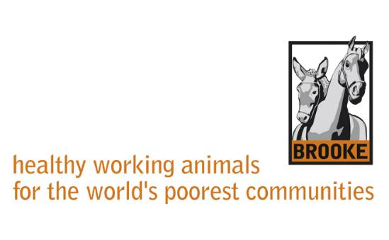 www.thebrooke.org