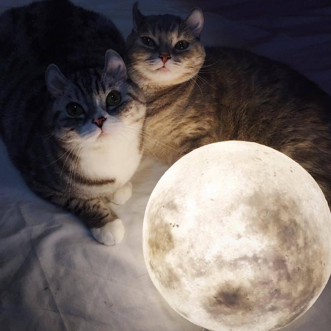 #lunalamp #月球燈luna #月亮燈#acornartstudio  photo by @popoooo