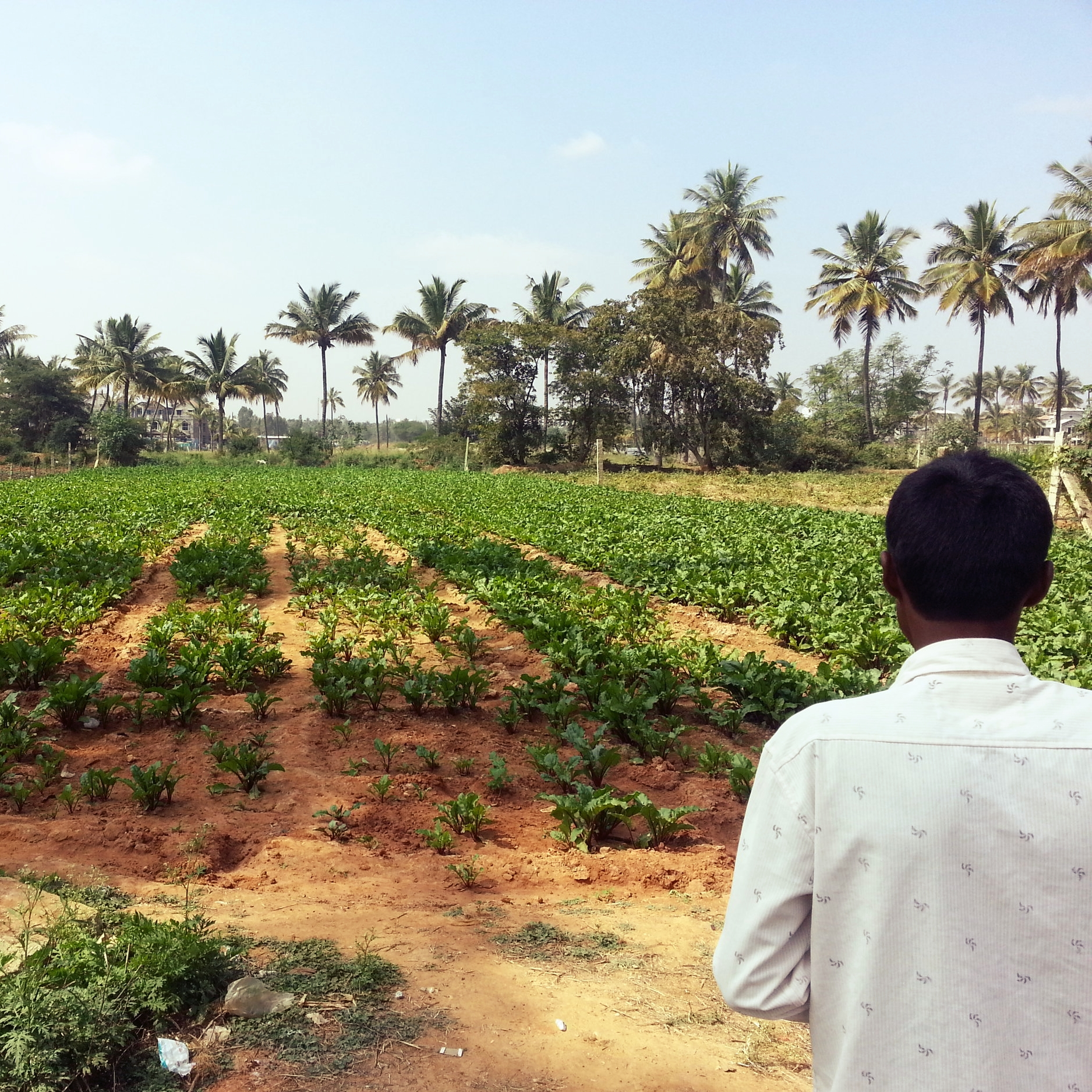 """Episode 8   """"And so what we eat on our plates starts to determine the fate of the soil of our land."""""""