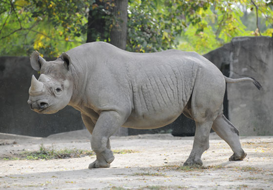 Photo courtesy of Brookfield Zoo