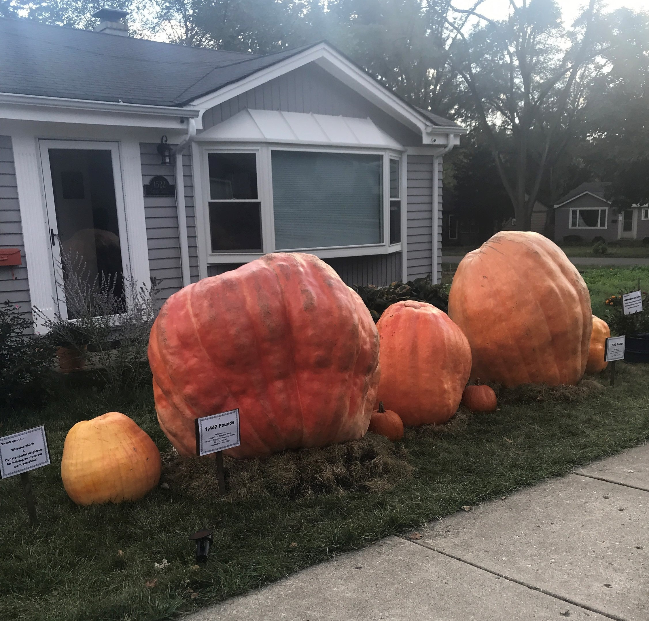 This year's heaviest pumpkin in Illinois...1522 pounds (second from left)