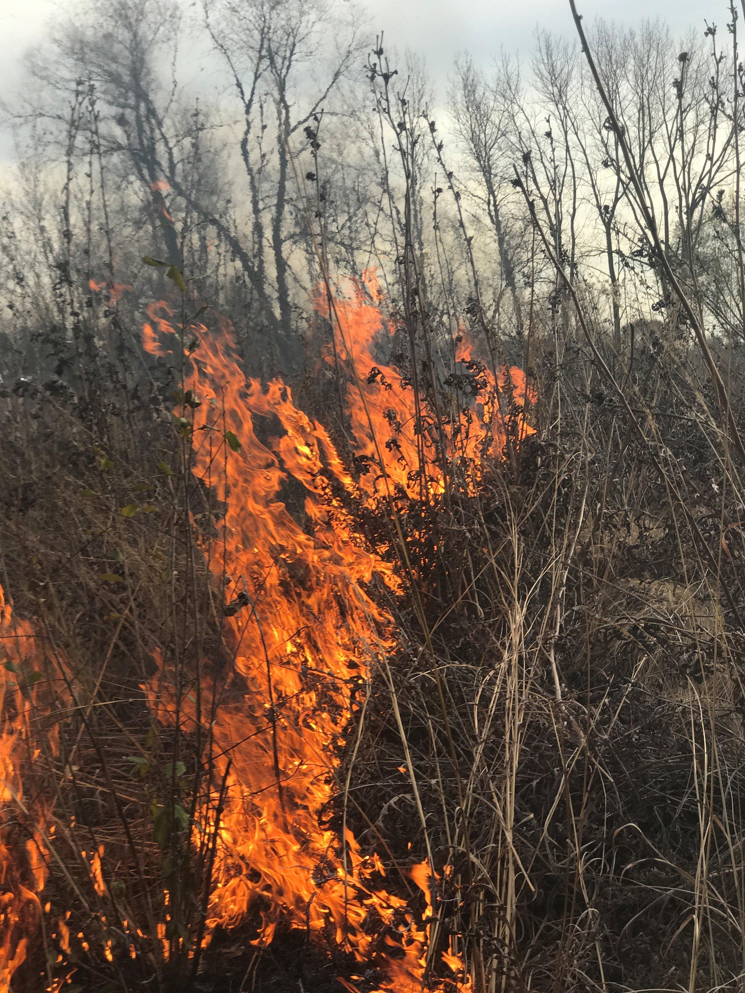 Fire-2.jpg