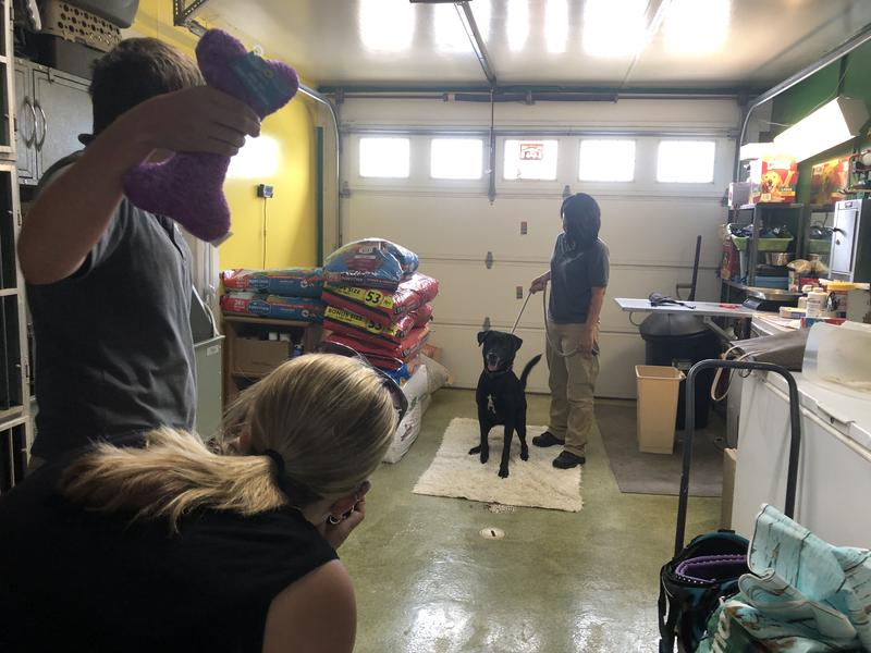 Photo shoot at the McDonough County Animal Shelter (photo by Emily Stieren)