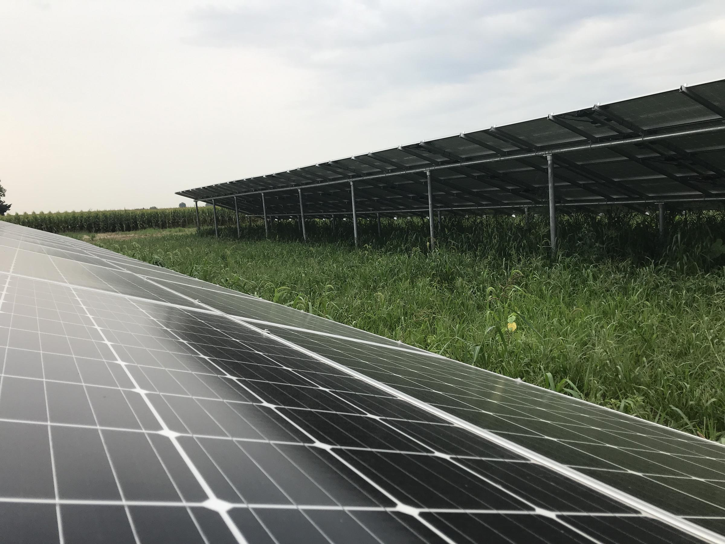 Banks of solar panels are becoming a more common sight across Illinois (photo courtesy of WNIJ)
