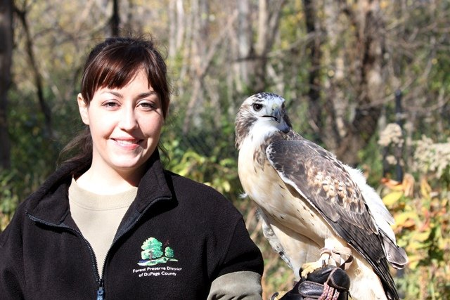 DuPage Forest Preserve District naturalist Stephanie Touzalin with one of the long term residents of the Willowbrook Wildlife Center
