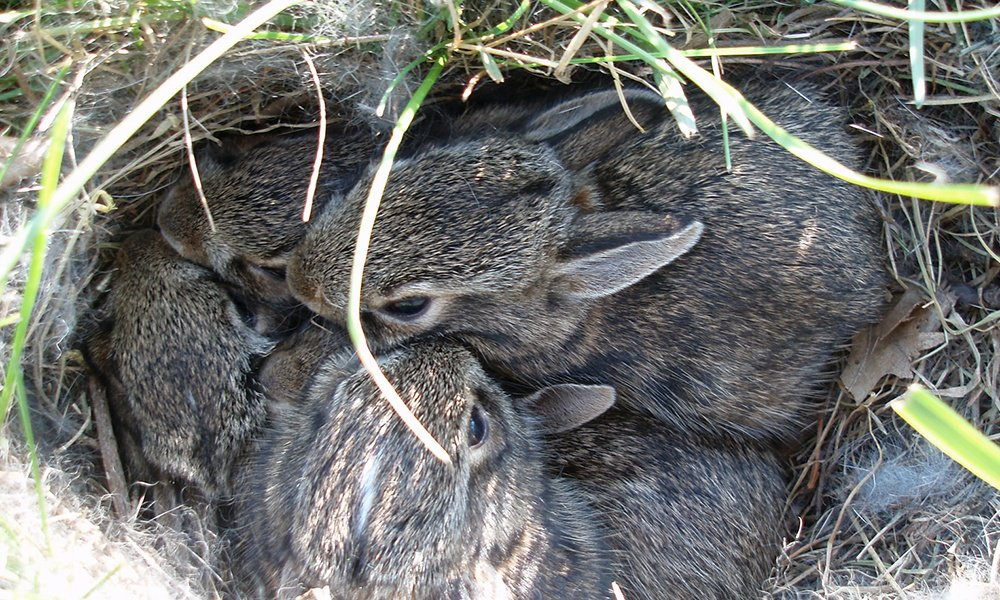 baby bunnies.jpg