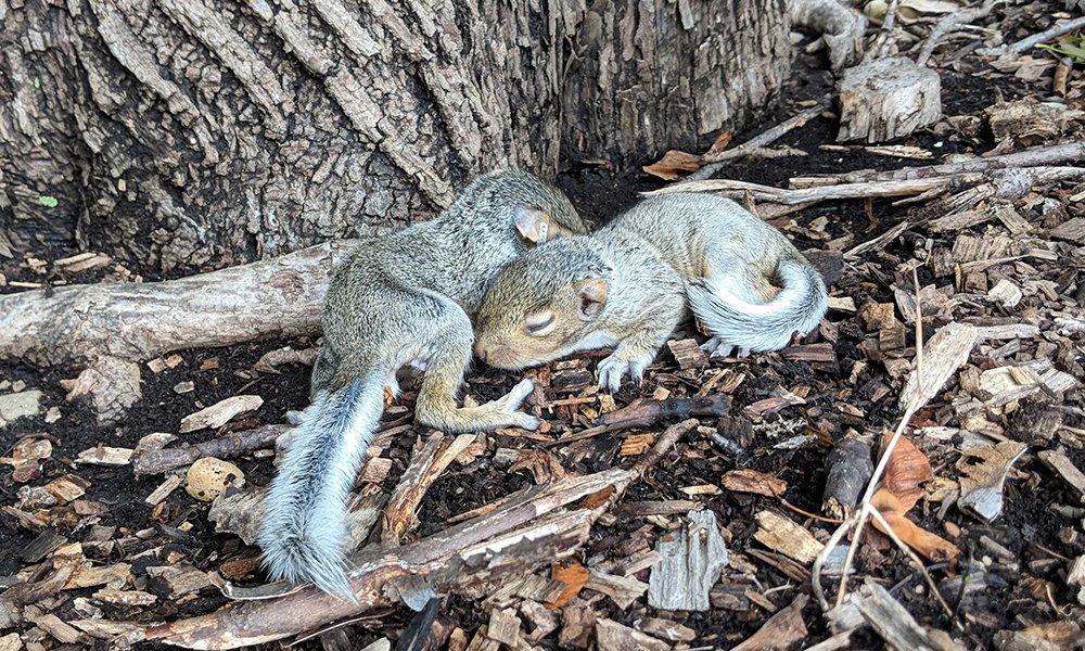 baby squirrel.jpg