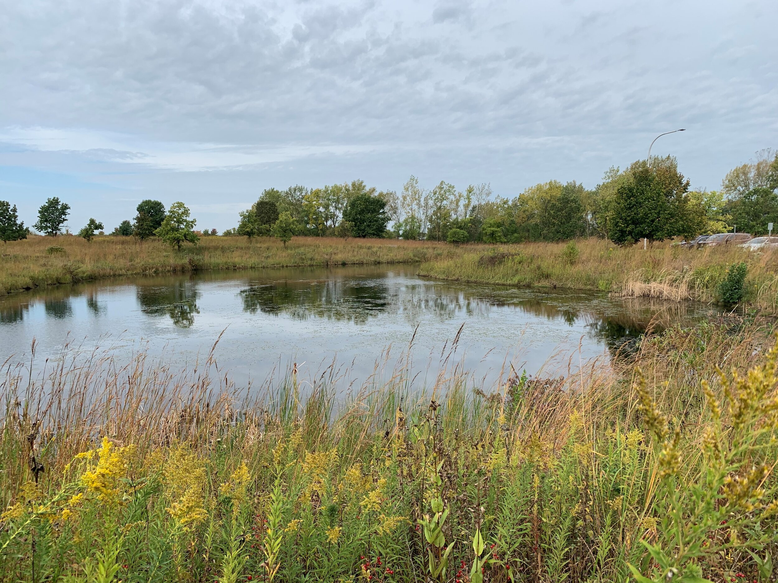 One of two ponds that attract waterfowl and other birds to the Russell Kirt Prairie at College of DuPage