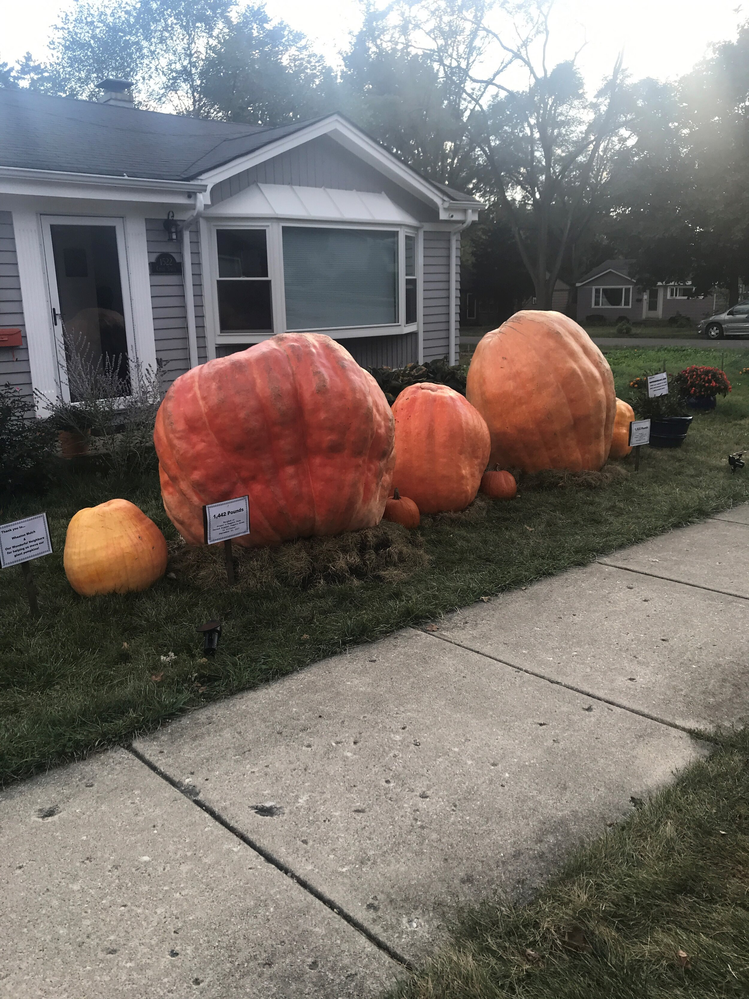 big_pumpkins.jpg