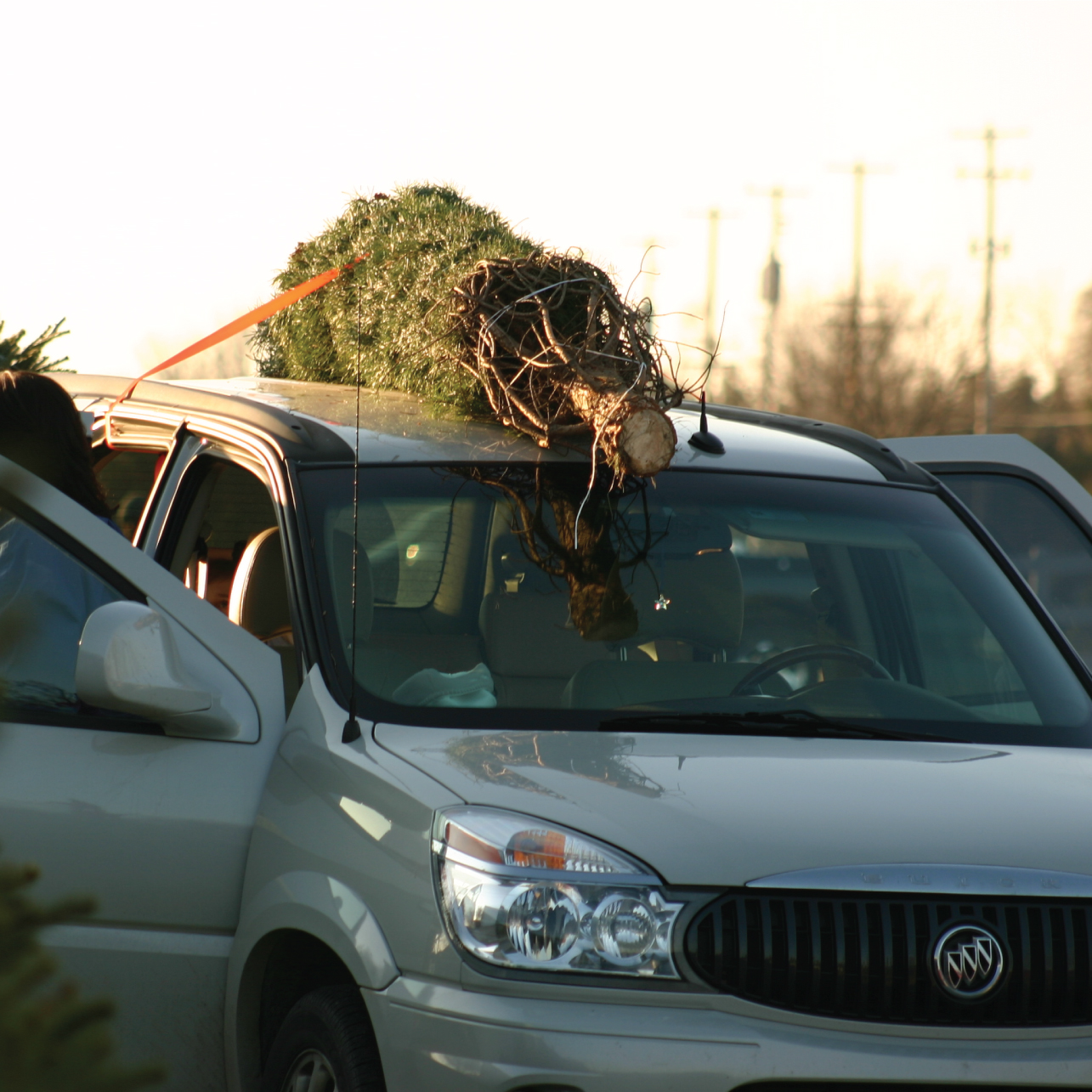take it home - Pack up your tree and get ready to make new memories that will last a lifetime.