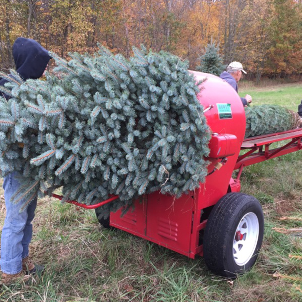 preparing your tree - We prepare the tree for you to take home.