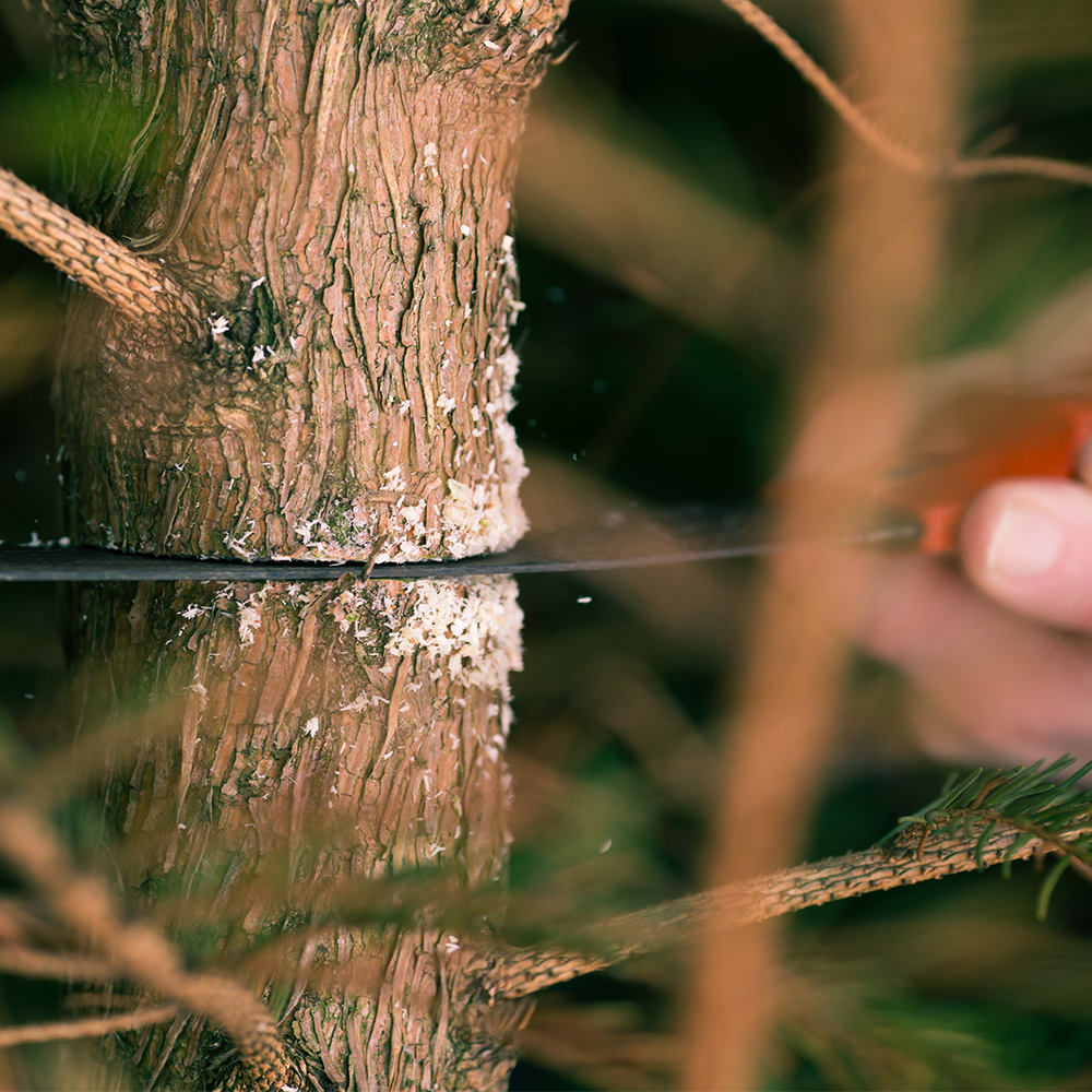 find your perfect tree - Harvest your new tree using one of our saws.