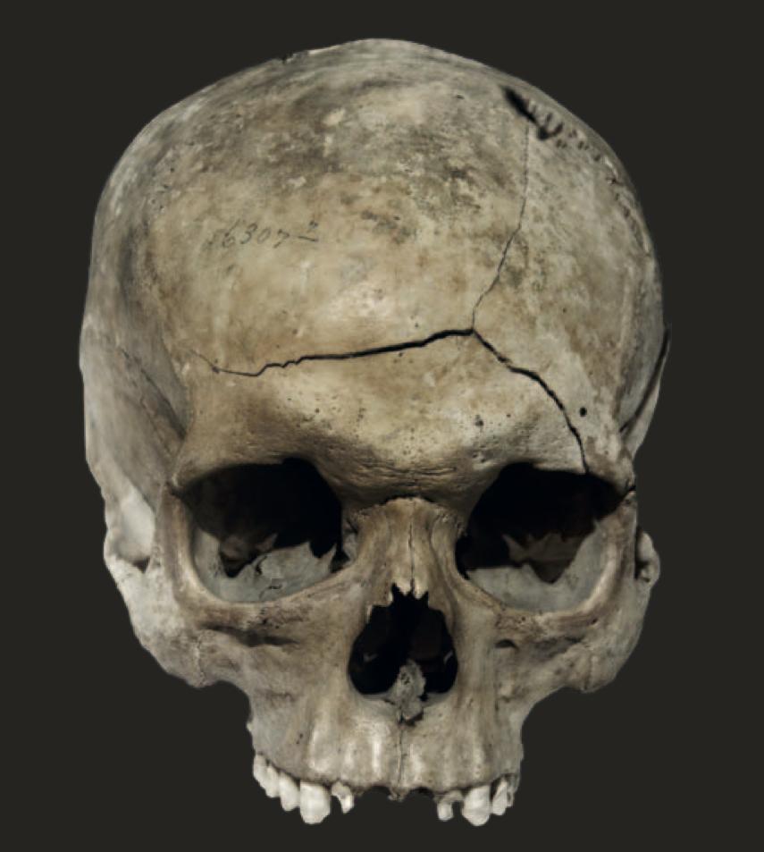 Scenario Skull.jpg