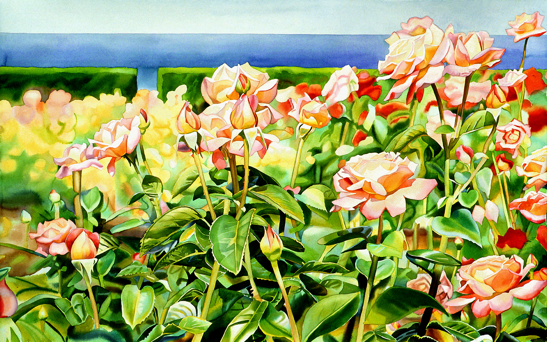Roses With Sea View
