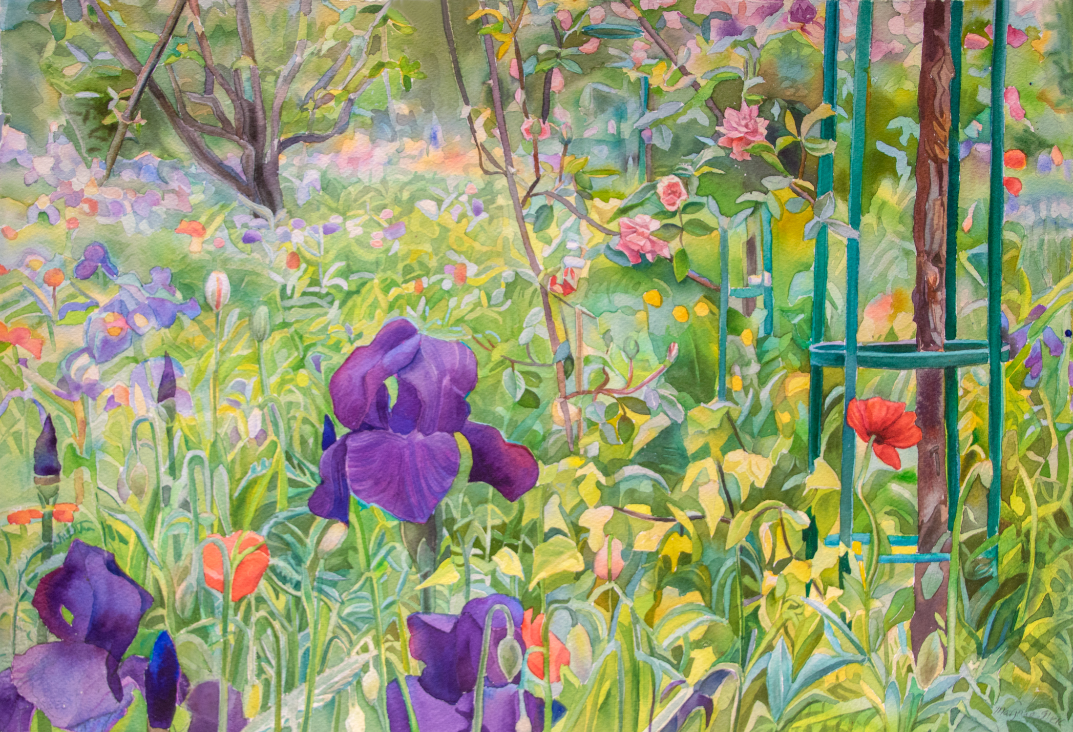 Iris Field, Giverny