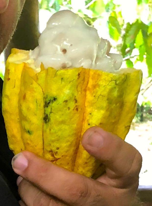 what's inside cocoa bean.jpg