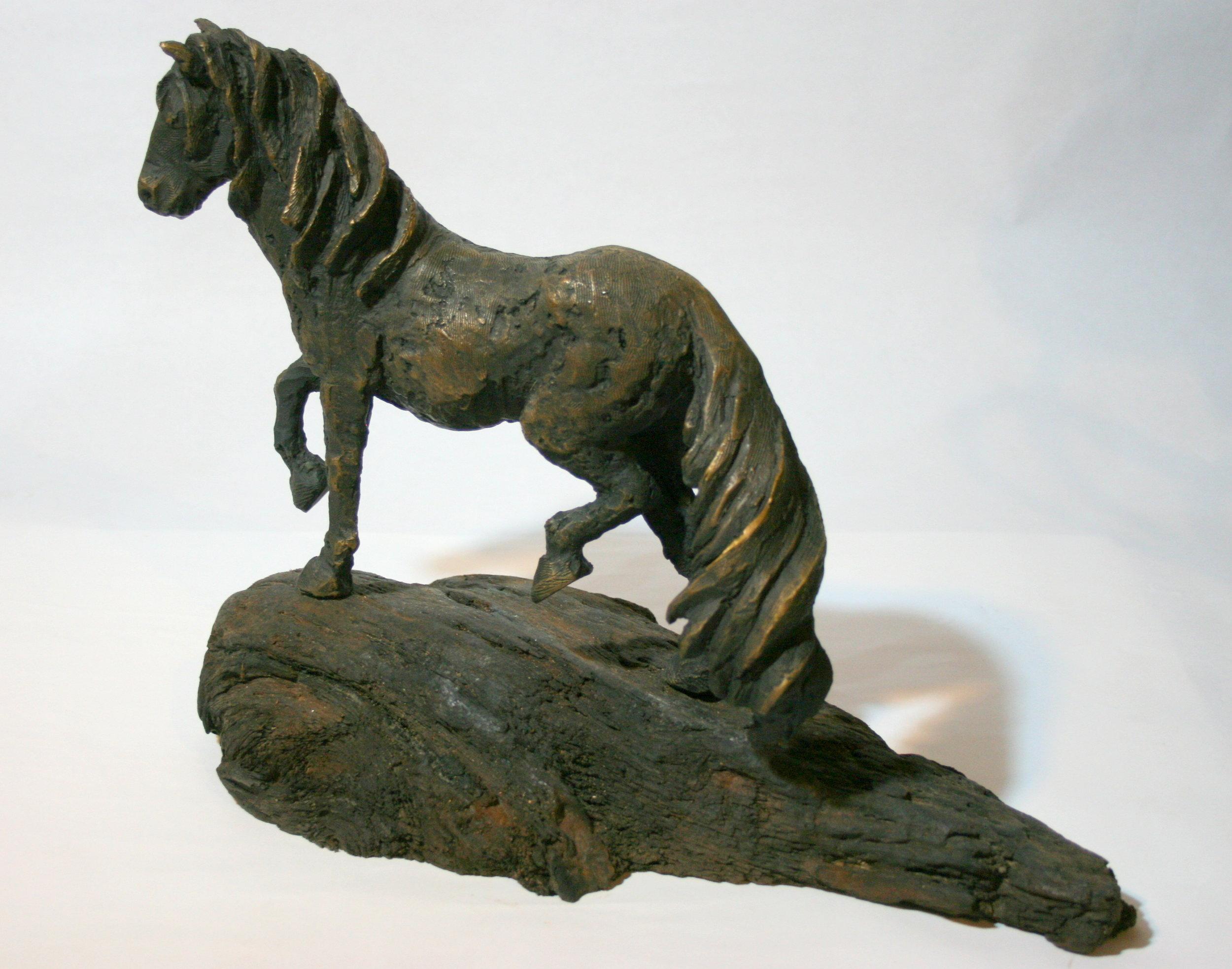 Kaimanawa Horse 1.jpg