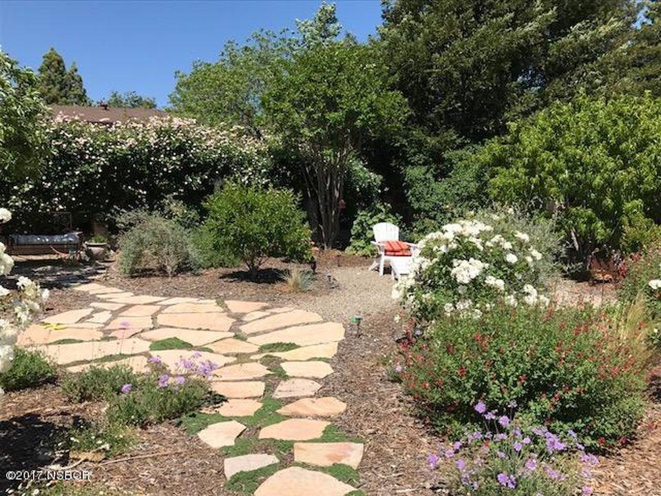 Holly_backyard.jpg