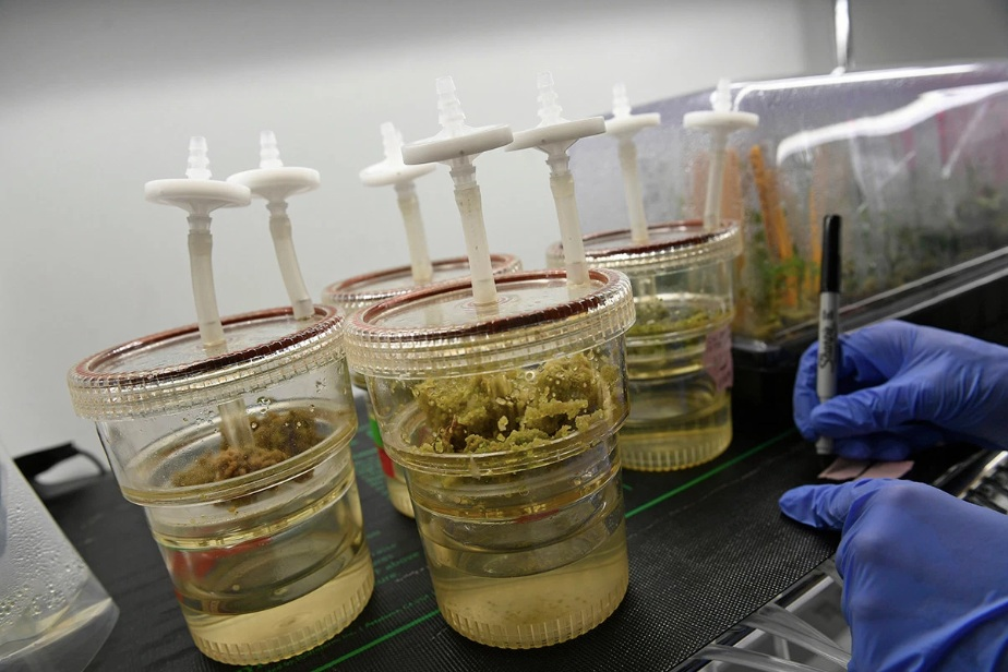 Future Weed: Formulations, Patents, and Where Cannabis is Going Next - ROLLING STONE