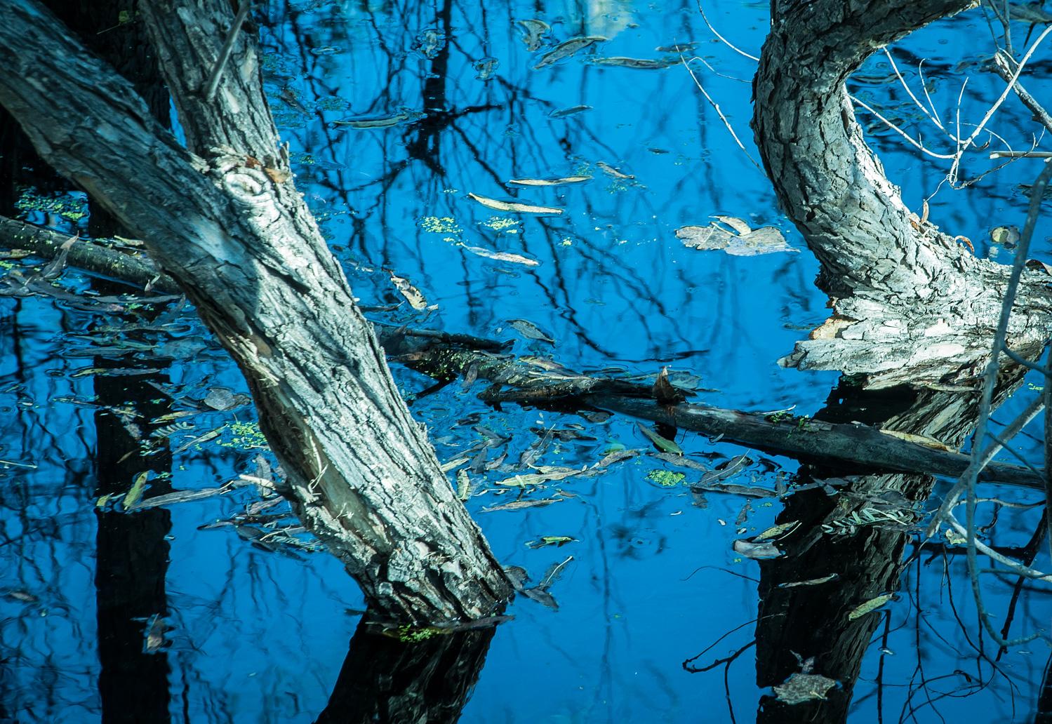 Flooded  Hassayampa River Preserve, AZ