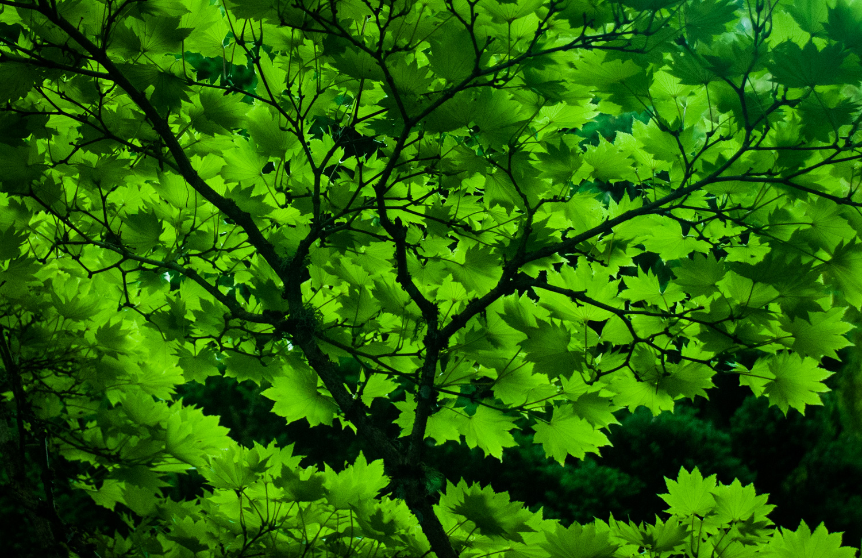 Japanese Garden  Butchart Garden, Victoria, BC