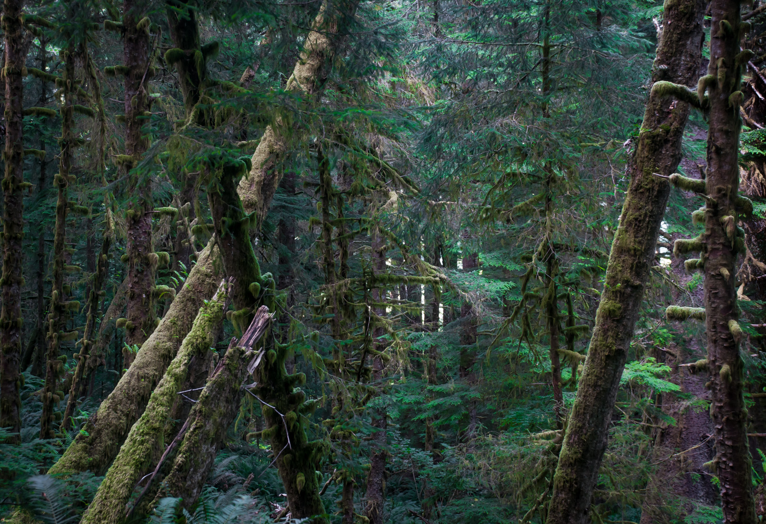Wood Frame  Oregon Coast