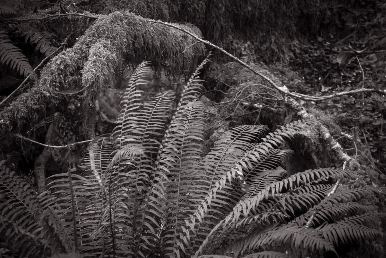 Rain Forest   Cannon Beach, OR