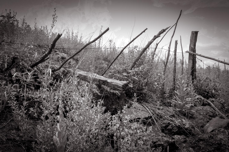 Leaning   Watson Lake, AZ