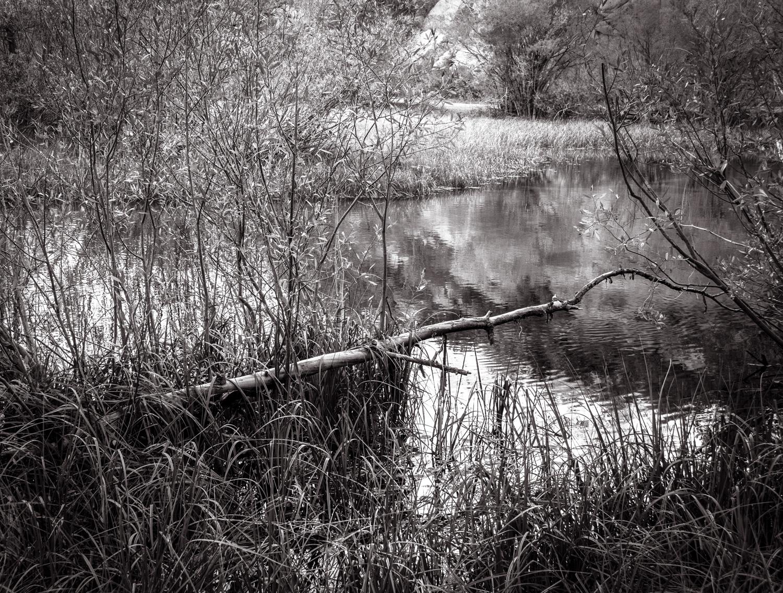 Pond Beyond   Sabrina Lake, CA