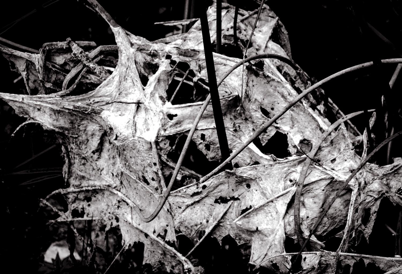 Flood Web