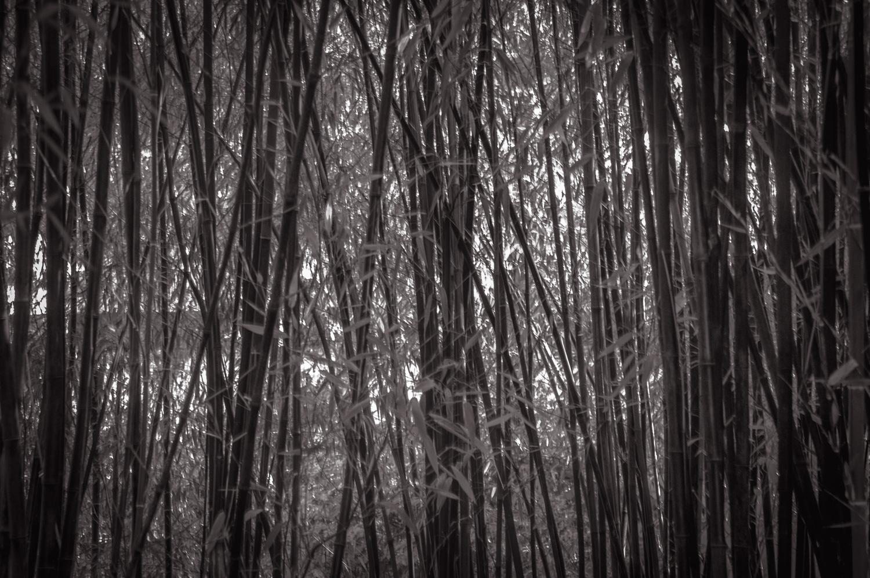 Bamboo Jungle   Victoria, BC