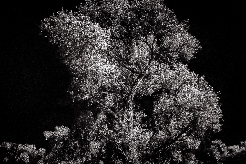 Tree Light   Hassayampa River Preserve, AZ