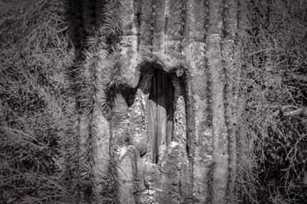 Sorry Saguaro   Phoenix, AZ