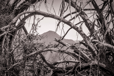 Old Junipers   Saguaro Lake, AZ