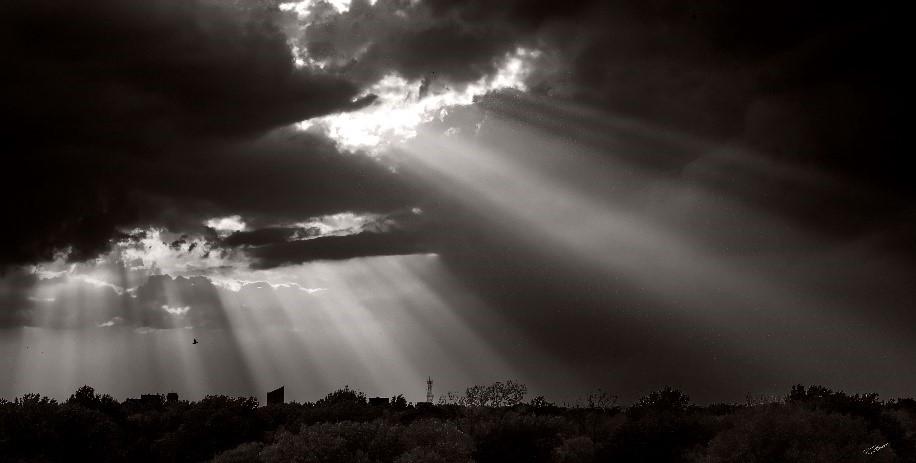 Ron Baker Sunlight.jpg