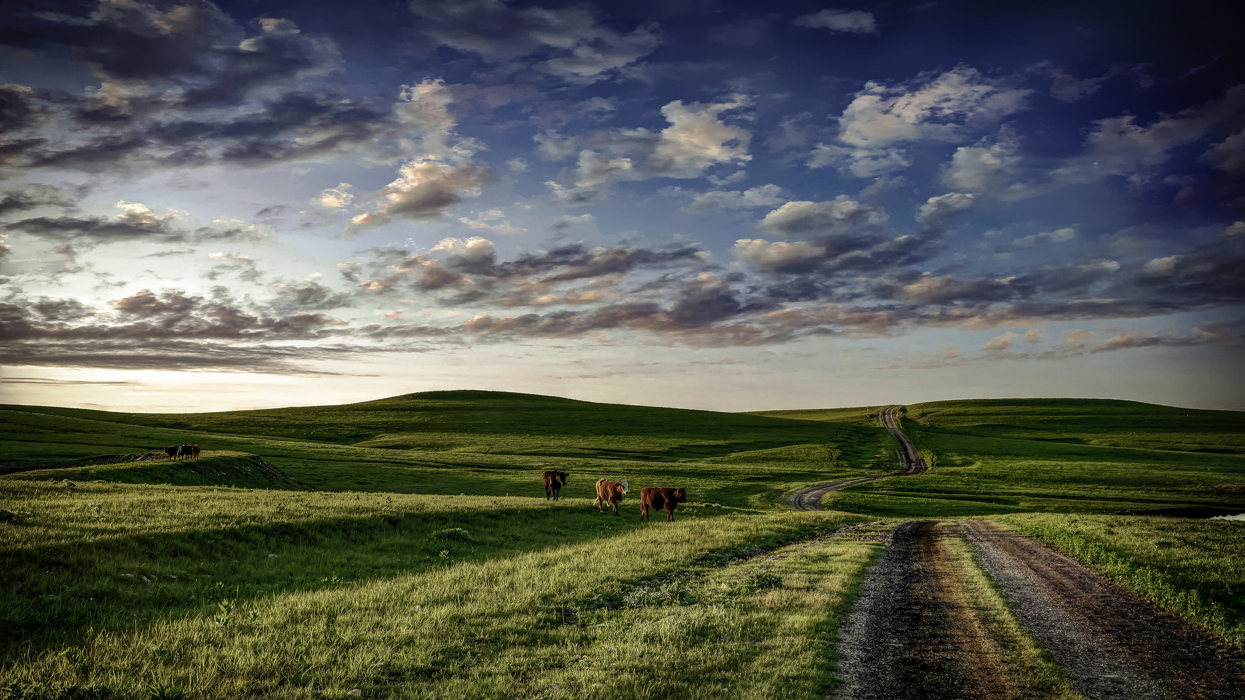"""""""Cows Come Home,"""" by Carlton Heller"""