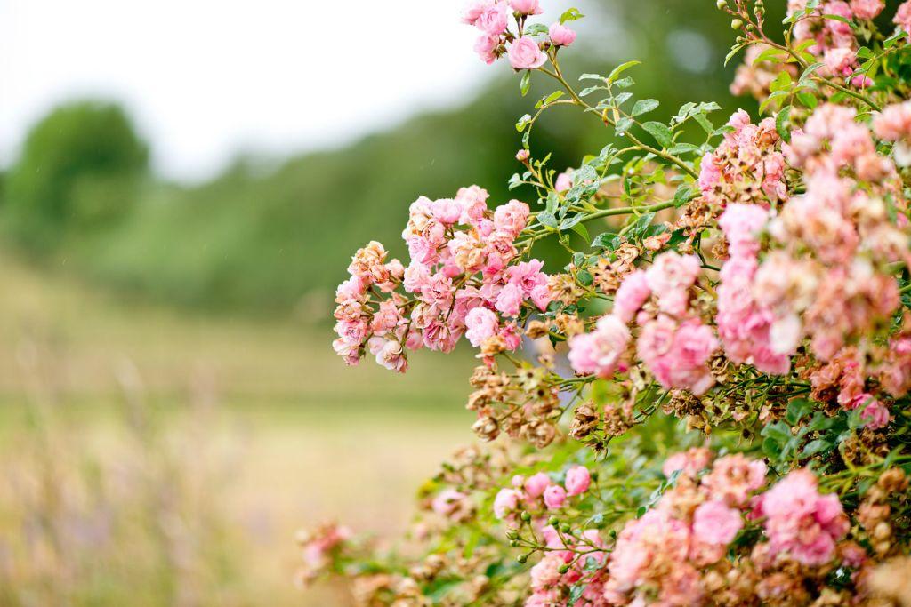 Copy of Flowers