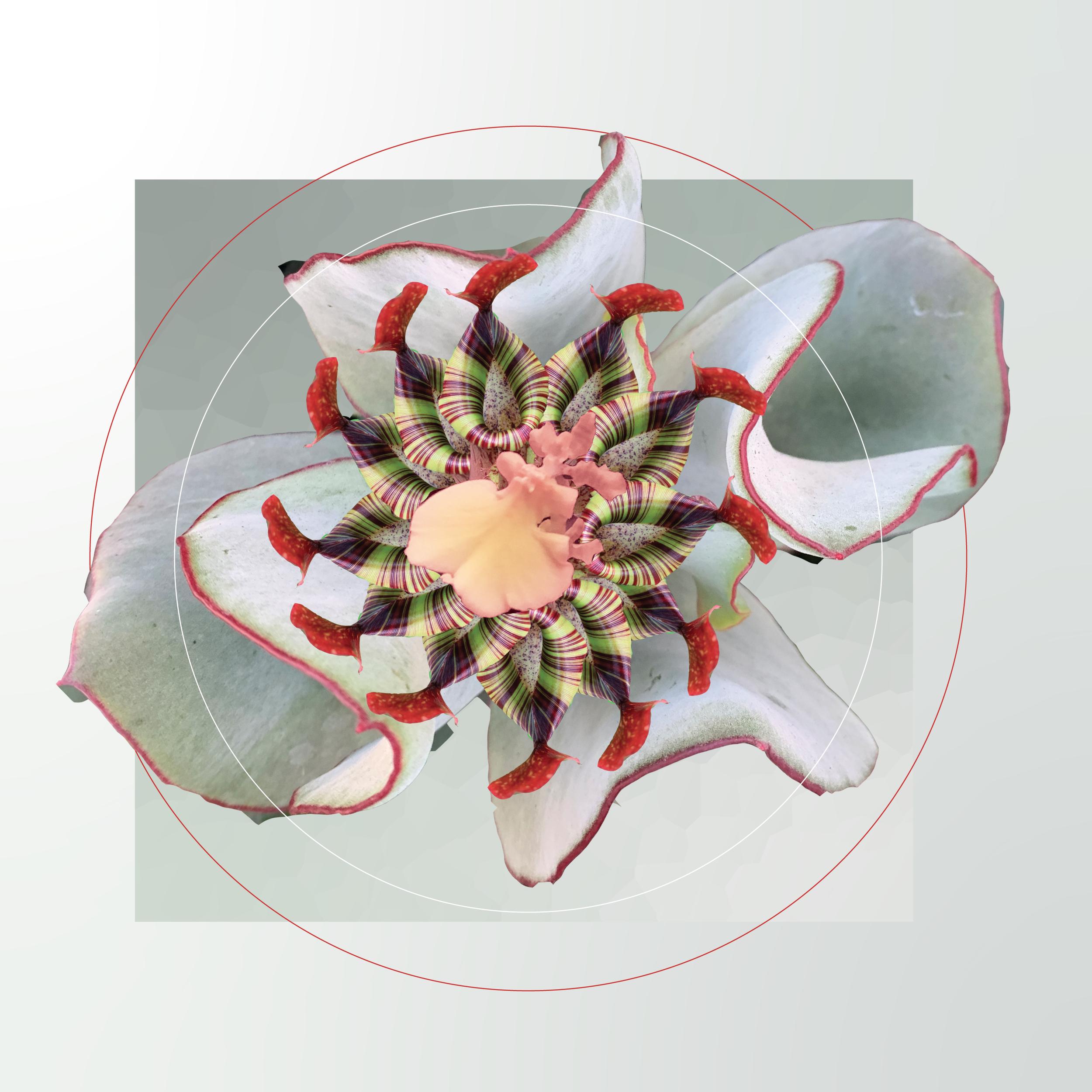 fleurhighresolution.png