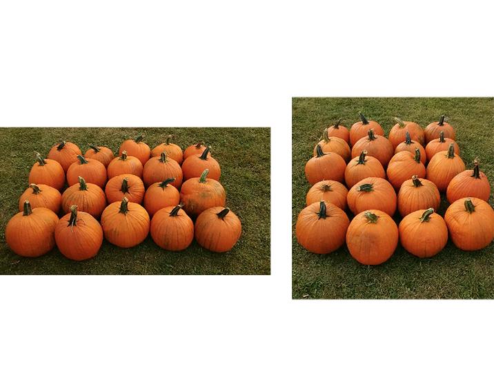 multiplication-division-same-but-different_pumpkins.jpg