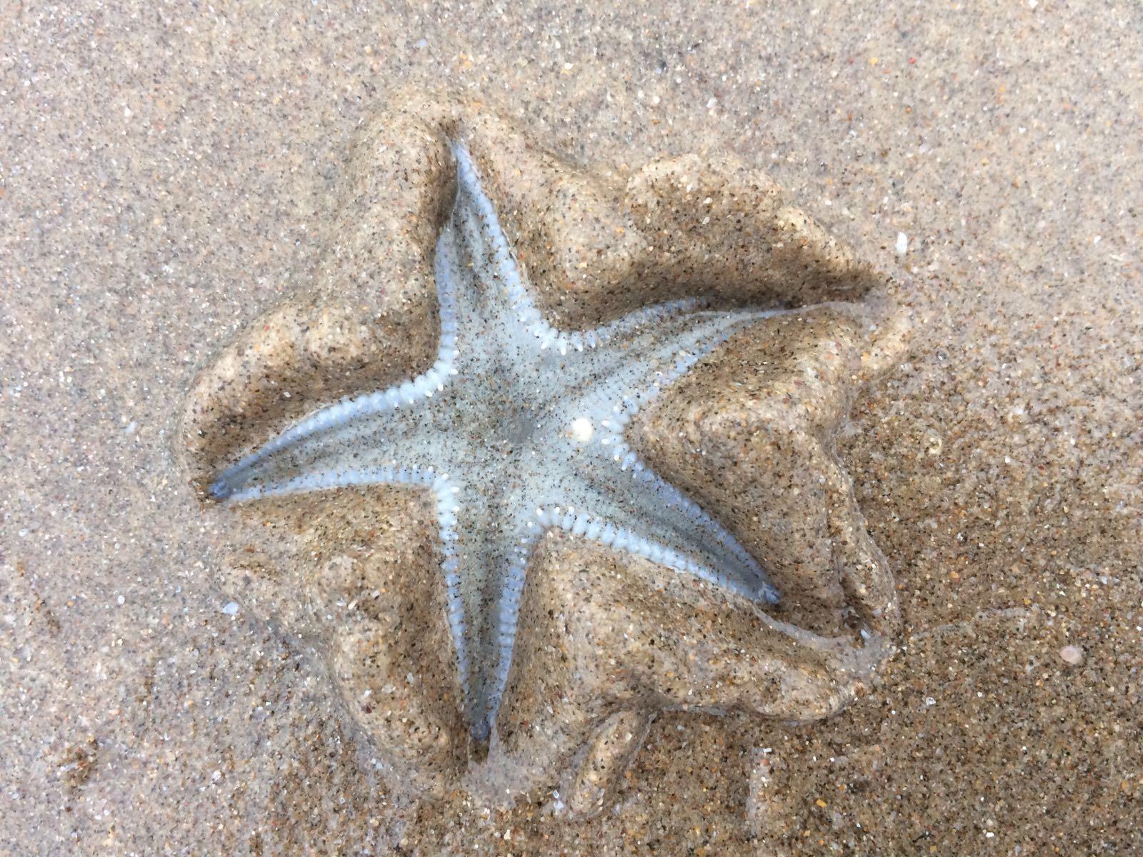 Star Fish Goa.JPG