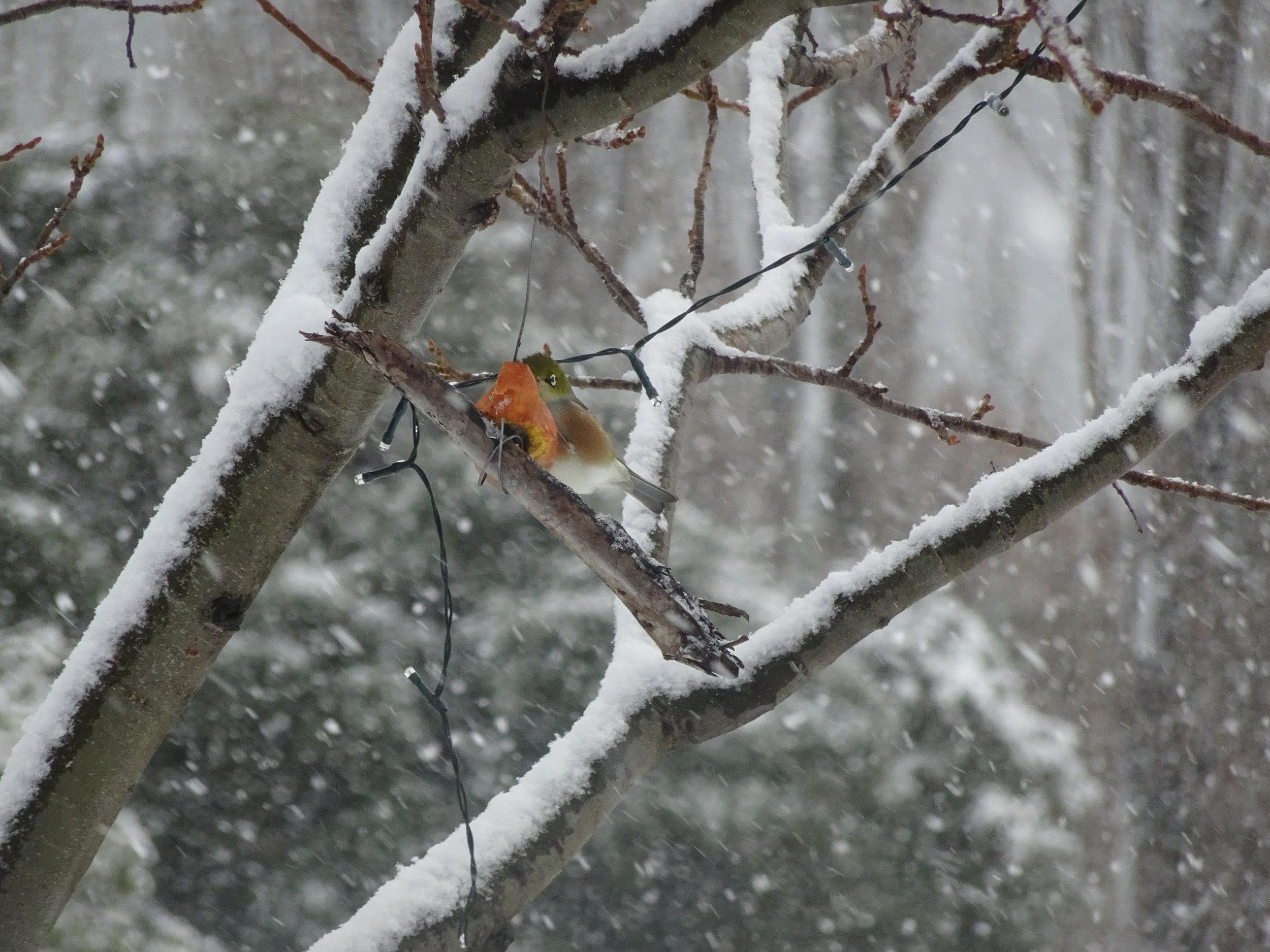 Winter Whispering.JPG