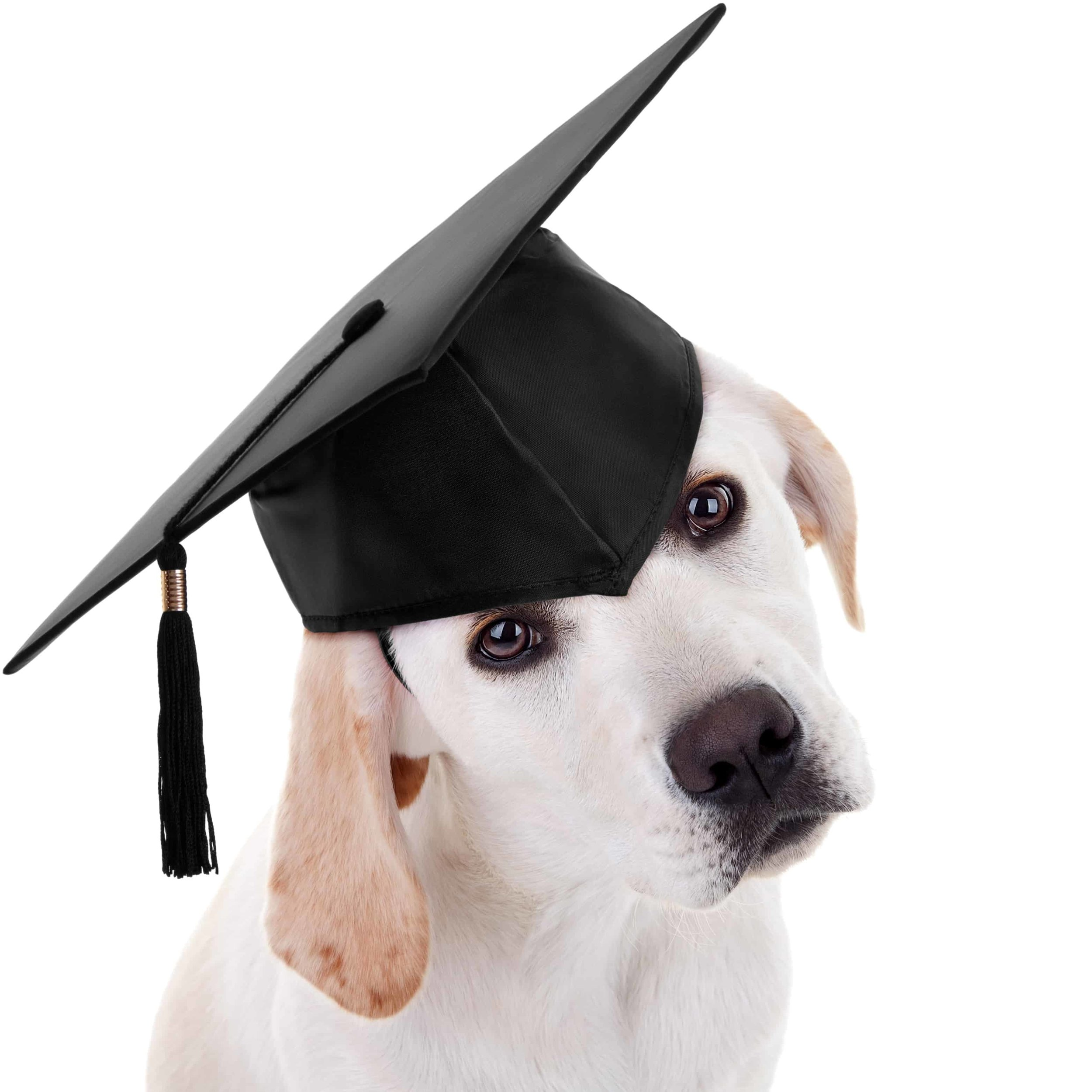 dog-with-graduation-cap.jpg